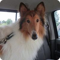 Adopt A Pet :: PIPPIN - Dublin, OH