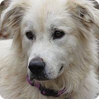 Adopt A Pet :: Maggie - Kiowa, OK