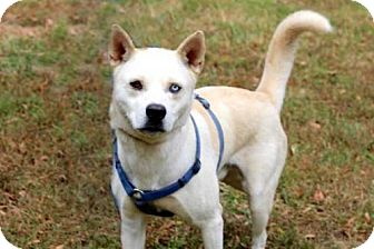 Husky Mix Dog for adoption in Allentown, Pennsylvania - ZANE