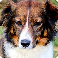 Adopt A Pet :: SWEET PEA(GENTLE-CALM-LOVING!! - Wakefield, RI