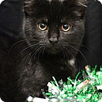 Adopt A Pet :: Midnight - Sacramento, CA
