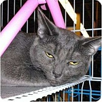 Adopt A Pet :: Misty & Midnight - Chesapeake, VA
