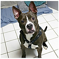 Adopt A Pet :: Bartlet - Forked River, NJ