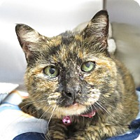 Adopt A Pet :: ashley - Laguna Woods, CA