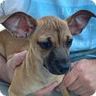 Adopt A Pet :: Violet