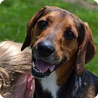 Hound (Unknown Type) Mix Dog for adoption in Lake Odessa, Michigan - Cletus