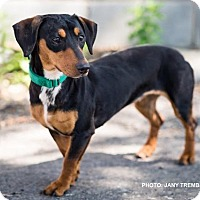 Adopt A Pet :: Fifi - Toronto, ON