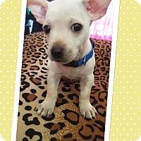 Adopt A Pet :: Casper - Brea, CA