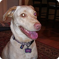 Adopt A Pet :: Kyra  (Courtesy Listing) - Gig Harbor, WA