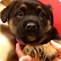 Adopt A Pet :: Marianne - Fairview Heights, IL