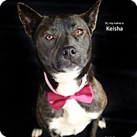 Adopt A Pet :: Keisha - Greenville, SC