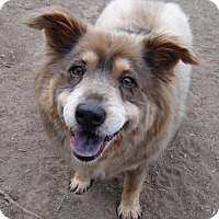 Adopt A Pet :: Estella - Seal Beach, CA