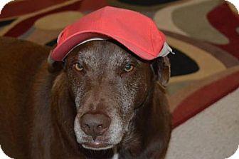 Labrador Retriever/Shar Pei Mix Dog for adoption in Pensacola, Florida - Coconut **Courtesy Post**