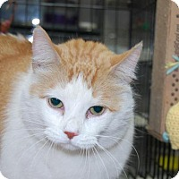 Adopt A Pet :: Flame - Brooklyn, NY