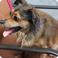 Adopt A Pet :: Aria - tampa, FL