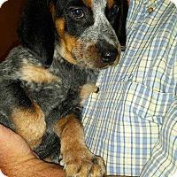 Adopt A Pet :: Todd - Virginia Beach, VA