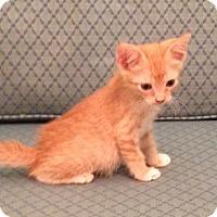 Adopt A Pet :: Marshal - Orlando, FL