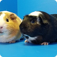 Adopt A Pet :: Flower and Thumper - Lewisville, TX