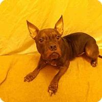 Adopt A Pet :: LALA - Upper Marlboro, MD