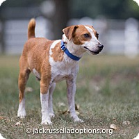 Adopt A Pet :: Nick - Conyers, GA