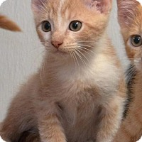 Adopt A Pet :: Catrick Swayze - DuQuoin, IL