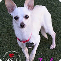 Adopt A Pet :: Lola - Youngwood, PA