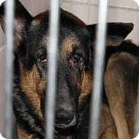 Adopt A Pet :: HANS - Chicago Ridge, IL