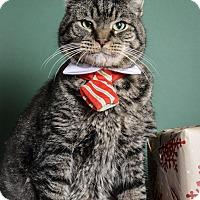 Domestic Shorthair Cat for adoption in Whitehall, Pennsylvania - Buddy