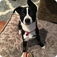 Adopt A Pet :: Melo - Portland, OR