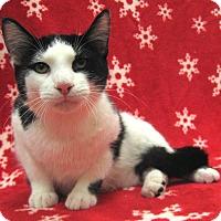 Adopt A Pet :: Klondike - Redwood Falls, MN