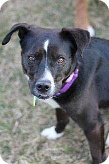 Terrier (Unknown Type, Small) Mix Dog for adoption in Hastings, New York - Nina