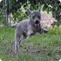 Adopt A Pet :: BRODY - Melbourne, FL