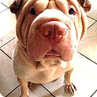 Adopt A Pet :: Jade - Gainesville, FL