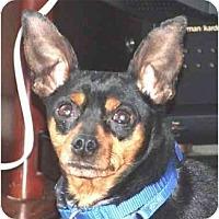 Adopt A Pet :: Musketeer Moe - Summerville, SC