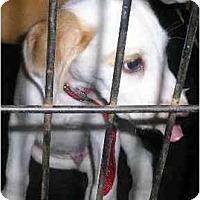 Adopt A Pet :: Henry - Carrollton, GA