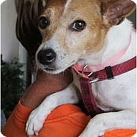 Adopt A Pet :: Bindi in Houston - Houston, TX