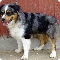Adopt A Pet :: Rocky  *MINI* - Washington, IL