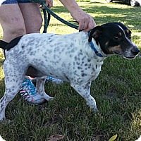 Adopt A Pet :: Andy - Geneseo, IL