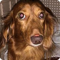 Adopt A Pet :: General - Orlando, FL