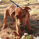 Adopt A Pet :: Huck