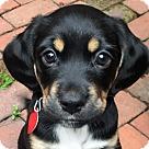 Adopt A Pet :: Oscar Jr