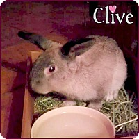Adopt A Pet :: Clive - Los Angeles, CA