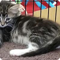 Adopt A Pet :: Rollo - Phoenix, AZ
