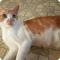 Adopt A Pet :: Jack - Colmar, PA