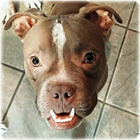 Adopt A Pet :: Elroy ~ Super Silly Sweetie - Caldwell, NJ