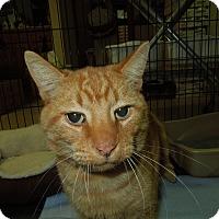 Adopt A Pet :: Gary - Medina, OH