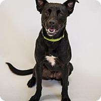 Adopt A Pet :: Ellie Mae - Atlanta, GA