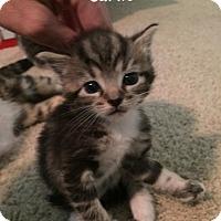 Adopt A Pet :: Carlie - Herndon, VA