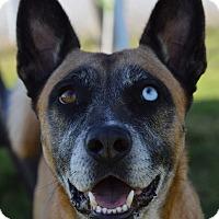 Adopt A Pet :: Ella - Patterson, CA