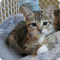 Adopt A Pet :: Zelda - Geneseo, IL